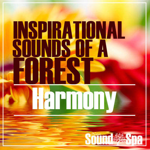 Inspirational Sounds Of A Forest